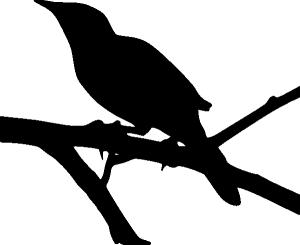 Mockingbird_silhouette